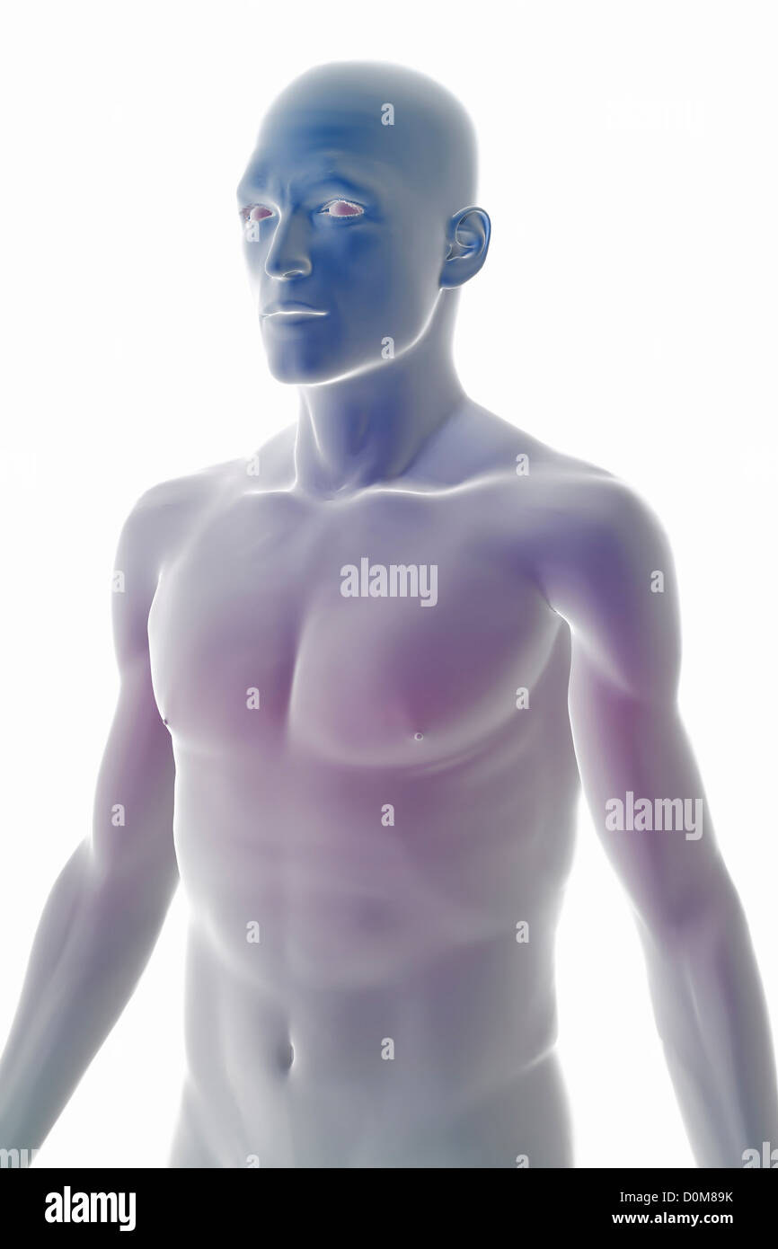 Stylized three-quarter view of the surface anatomy torso Stock Photo ...