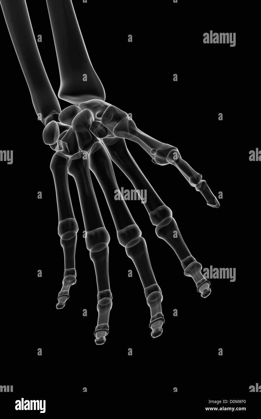 X-ray stylized bones of the left hand and wrist. - Stock Image