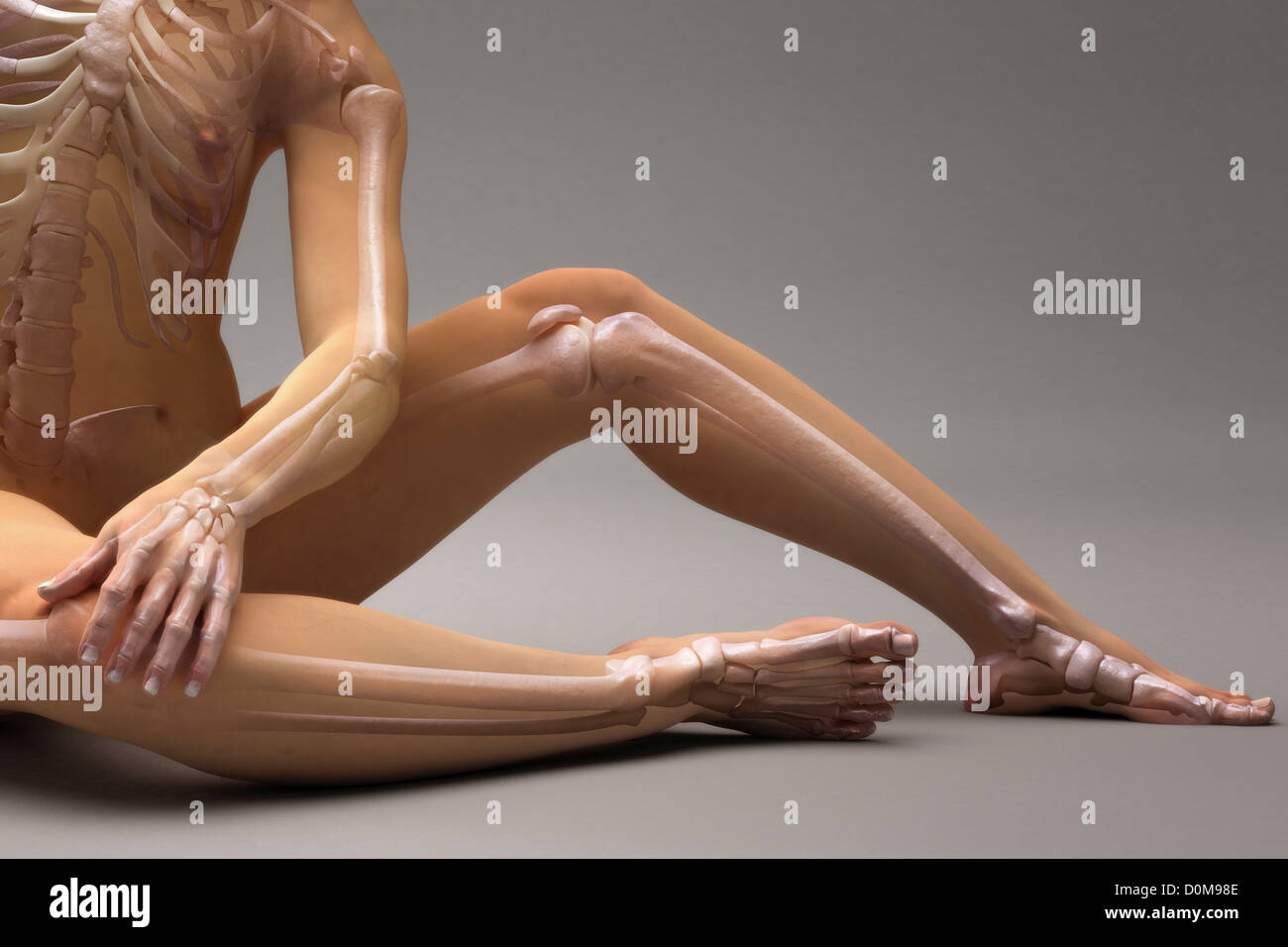Sitting posed female with the bones of the skeleton visible. - Stock Image