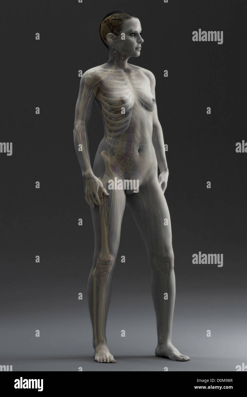 Human skeleton within a female figure viewed from a three quarter ...