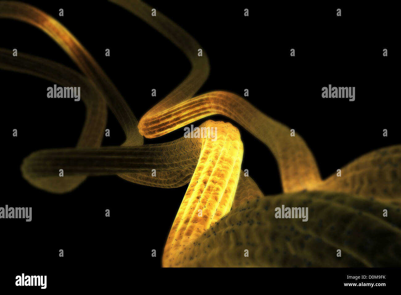 Microscopic styled visualization of nerve fibers. - Stock Image