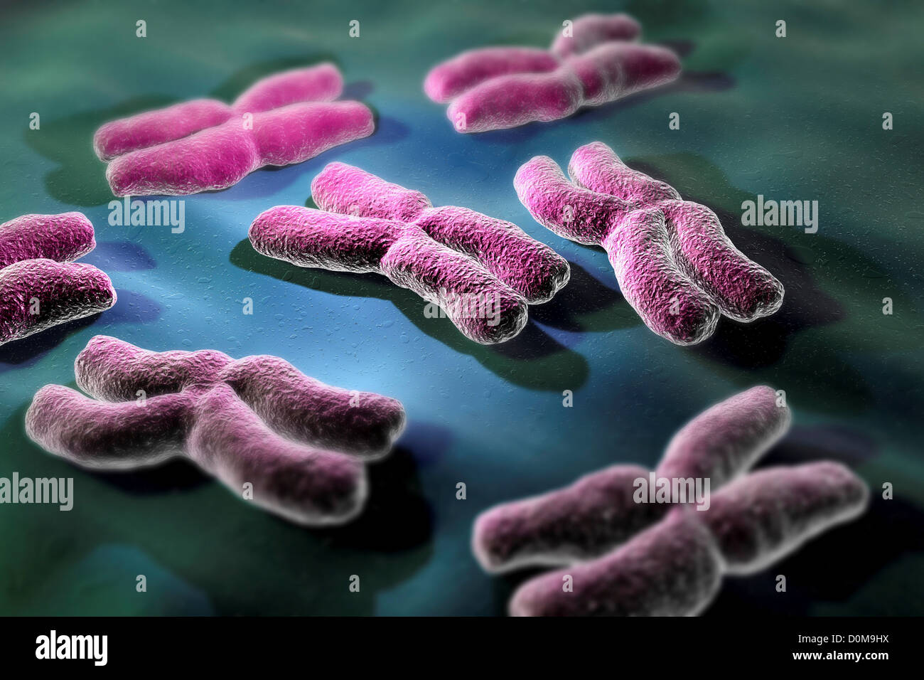 Conceptual depiction of human chromosomes. - Stock Image