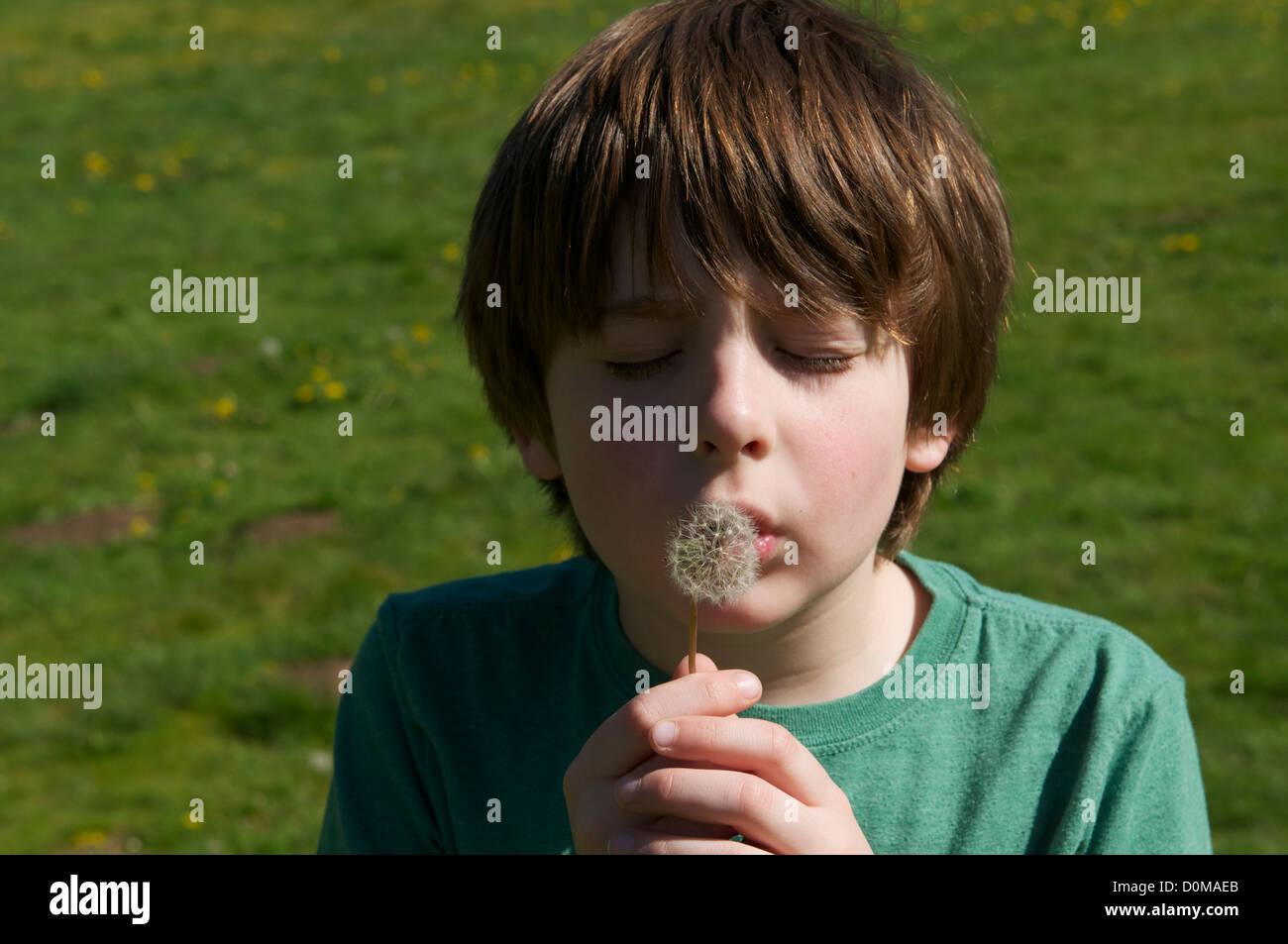 Boy makes wish on dandelion - Stock Image