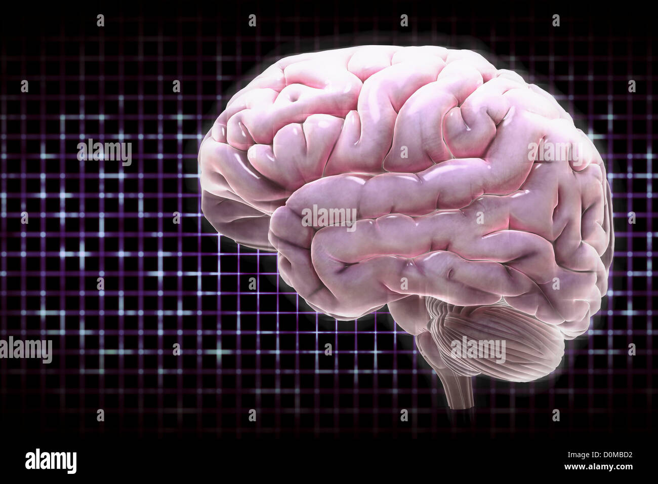 An illuminated, digital diagram of a human brain. - Stock Image