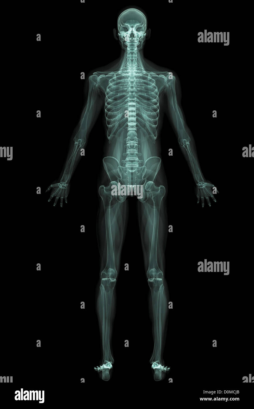X-Ray image showing the entire human body. - Stock Image