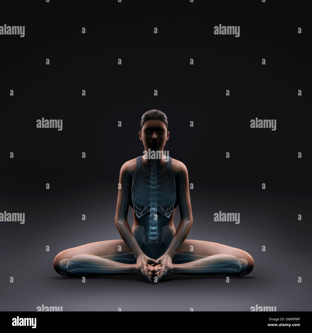 Skeleton layered over a female body in the bound angle pose showing skeletal activity in this particular yoga posture. - Stock Image