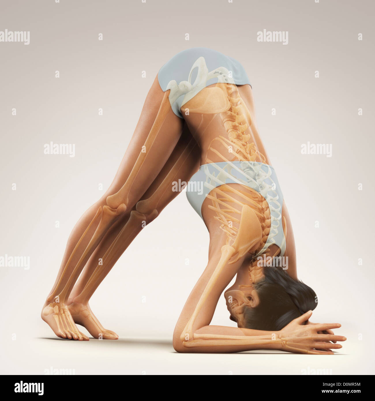 Skeleton Layered Over Female Body In Variation Dolphin Pose Showing Skeletal Alignment This Particular Yoga Posture