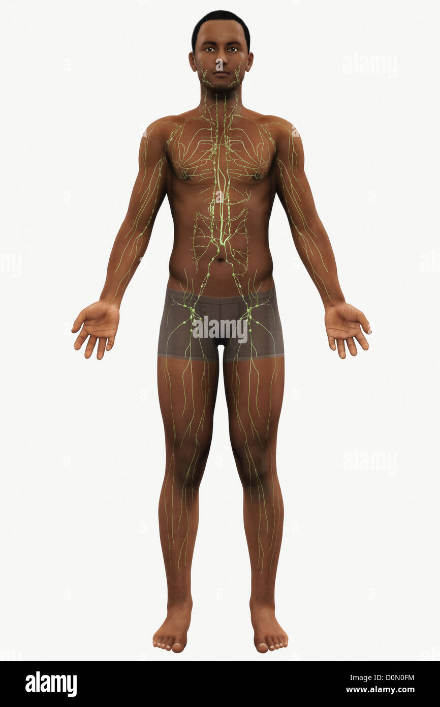 A View Of A Male Figure Of African Ethnicity Showing The Anatomy Of