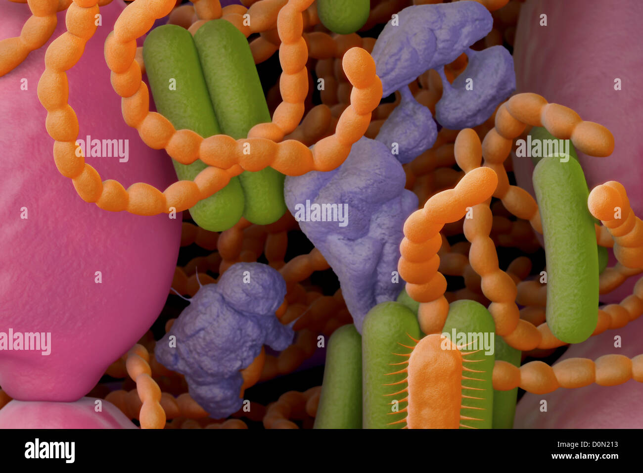 Close up of bacteria found in the mouth which can cause halitosis or bad breath. Stock Photo