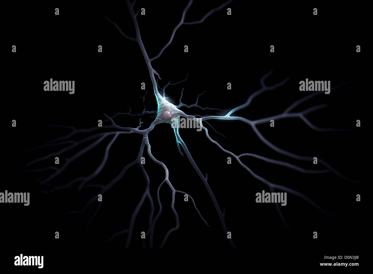 Pyramidal neurons or pyramidal cells are type neuron found in brain including regions such as cerebral cortex hippocampus Stock Photo