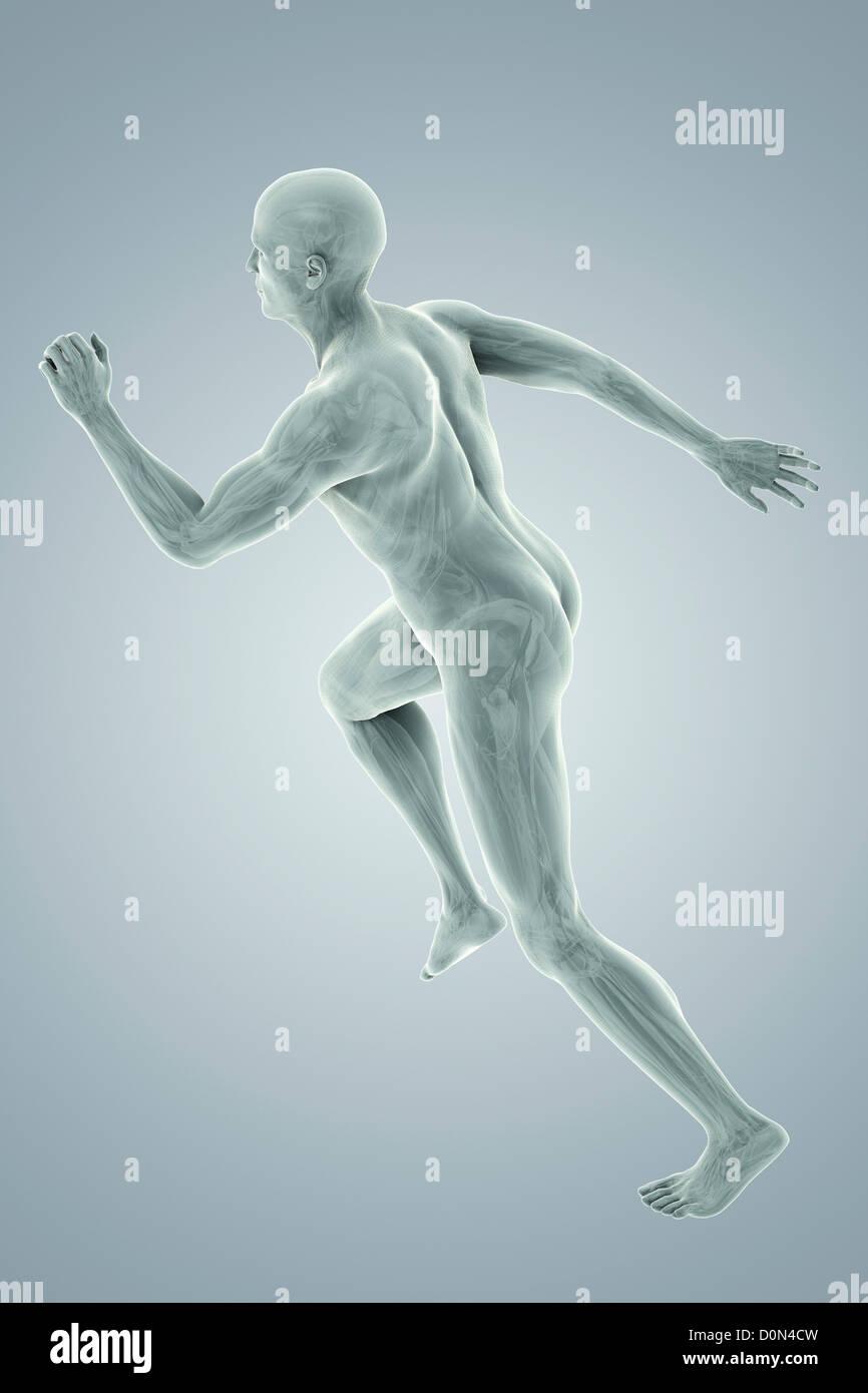 Human Body Anatomy Organs Full Figure Stock Photos Human Body