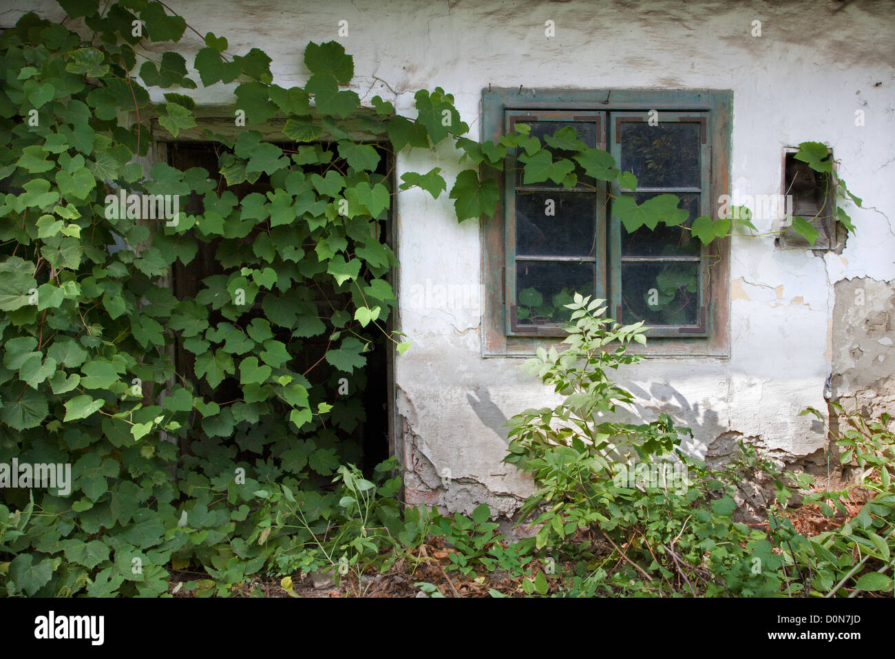 old window and woodbind - Stock Image