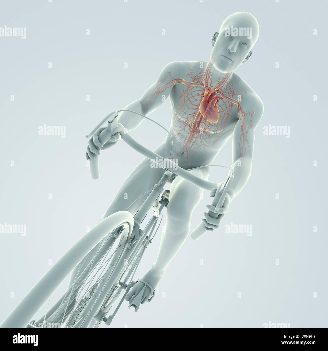 Male figure cycling a bicycle with internal anatomy of the heart is ...