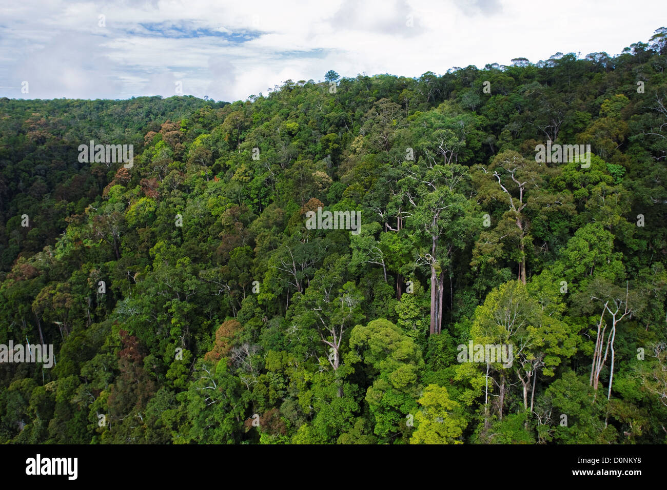An area of dense forest photographed from a helicopter around Maliau Basin, Sabah, Borneo, East Malaysia. - Stock Image