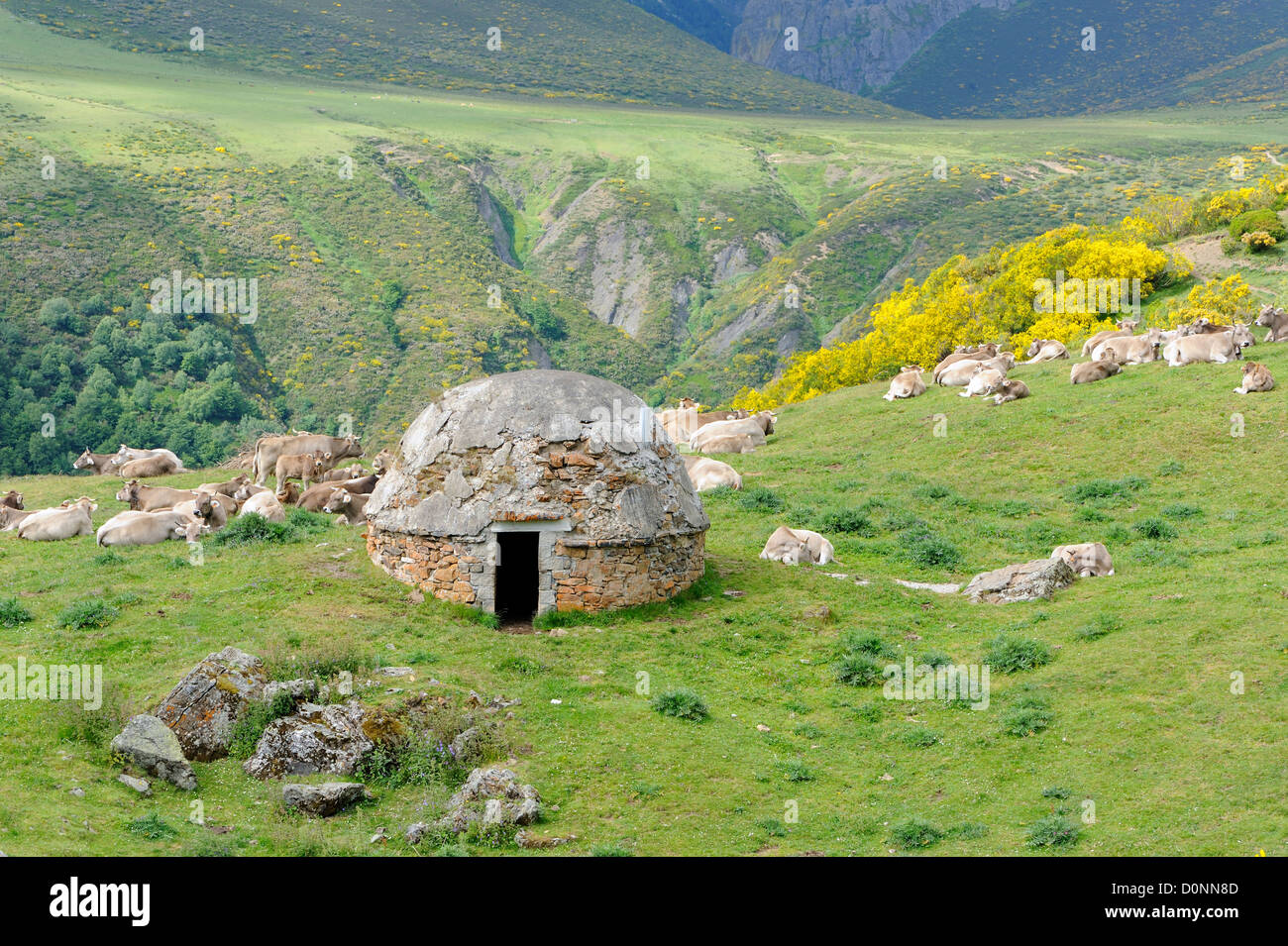 Round stone-built herder's hut.  Picos de Europa Asturias, Spain. - Stock Image