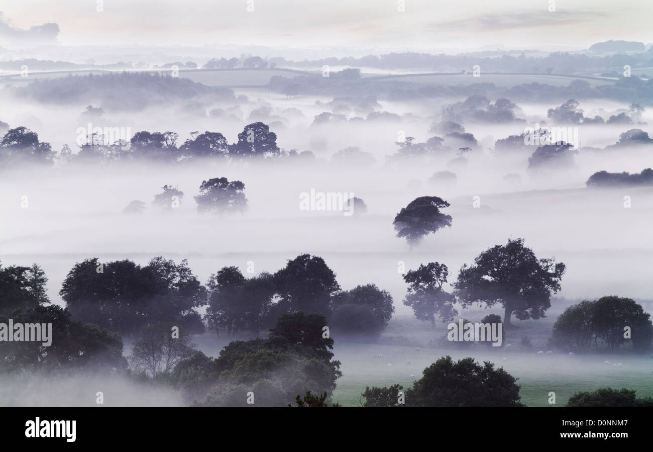 Mist in the Tamar Vally on the Devon Cornwall border - Stock Image