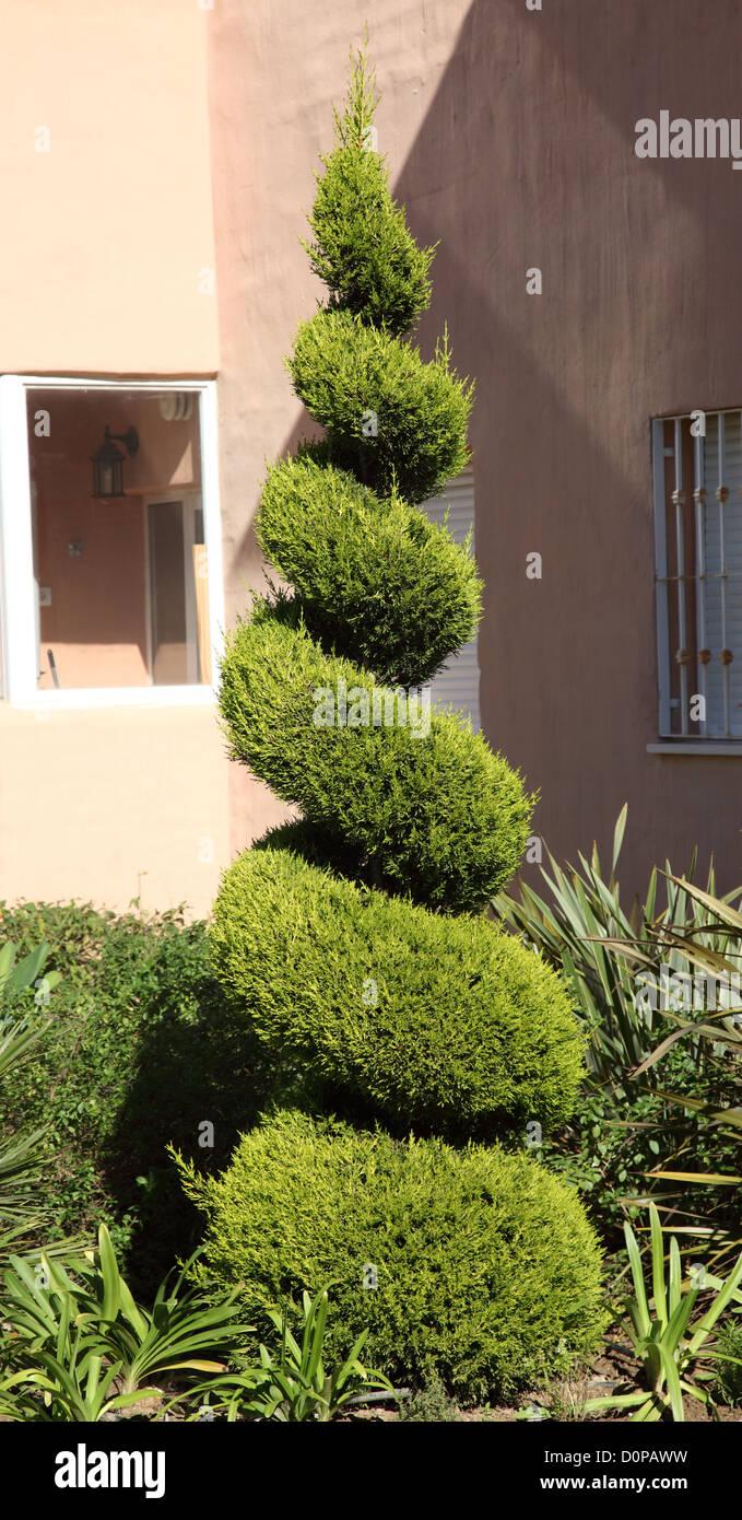 Decorative cut fir tree - Stock Image