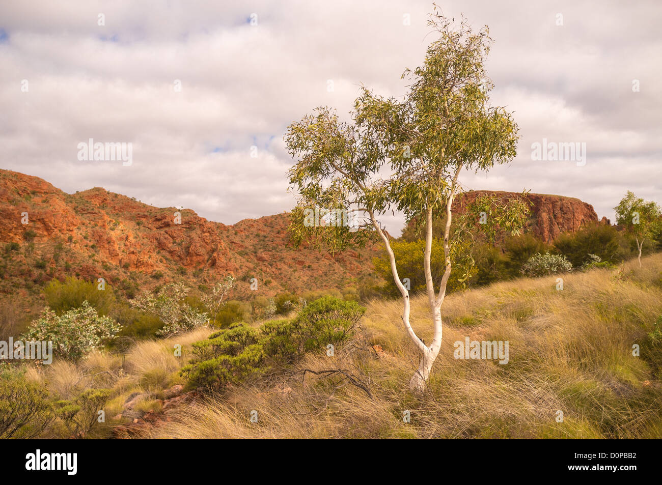 Rugged cliffs and ghost gums in Trephina Gorge in the East MacDonnell Ranges near Alice Springs - Stock Image