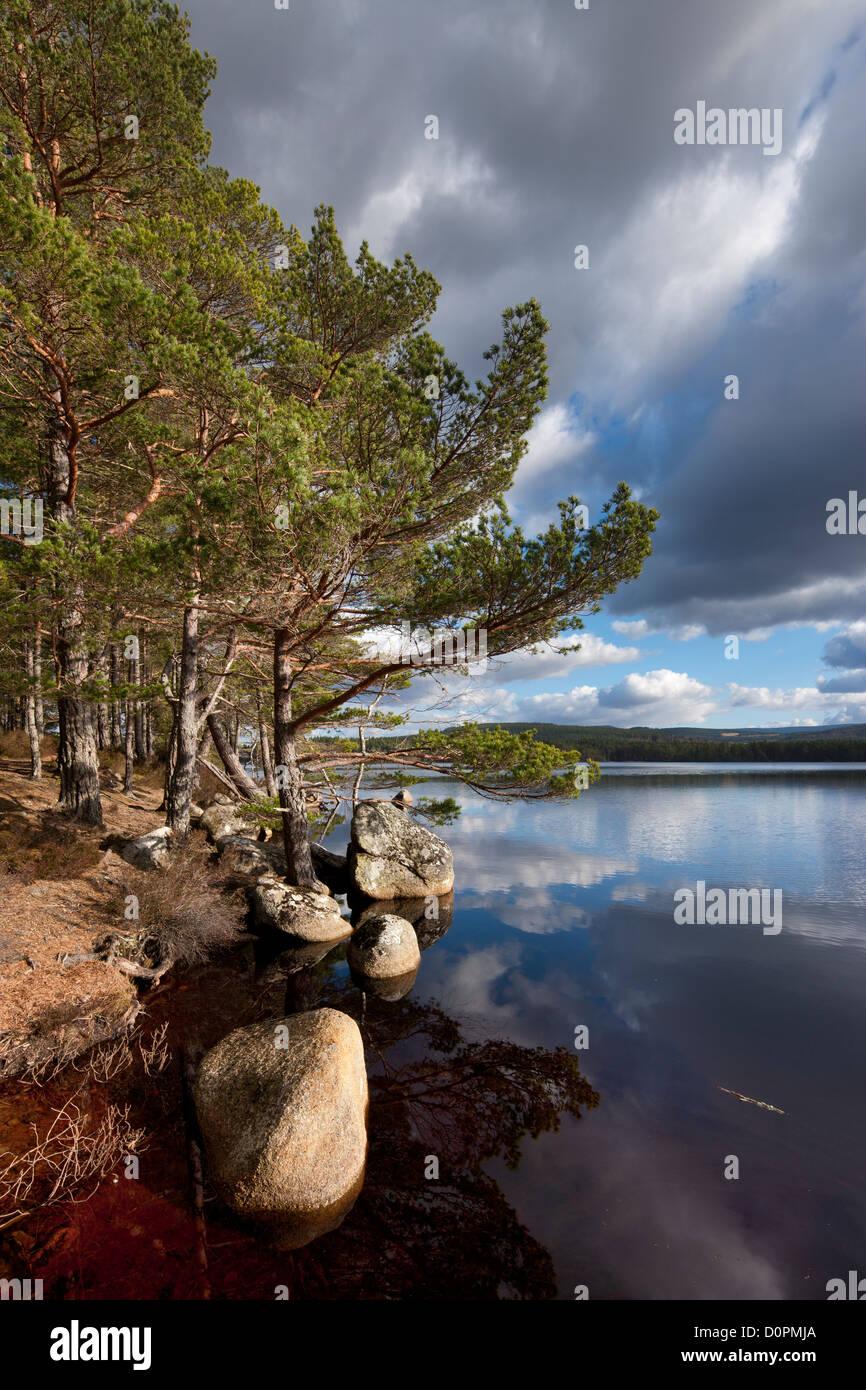 Loch Garten, Strathspey, Cairngorms National Park, Scotland - Stock Image