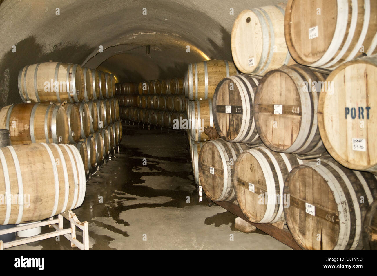 Wine Barrels at a Winery Celler - Stock Image