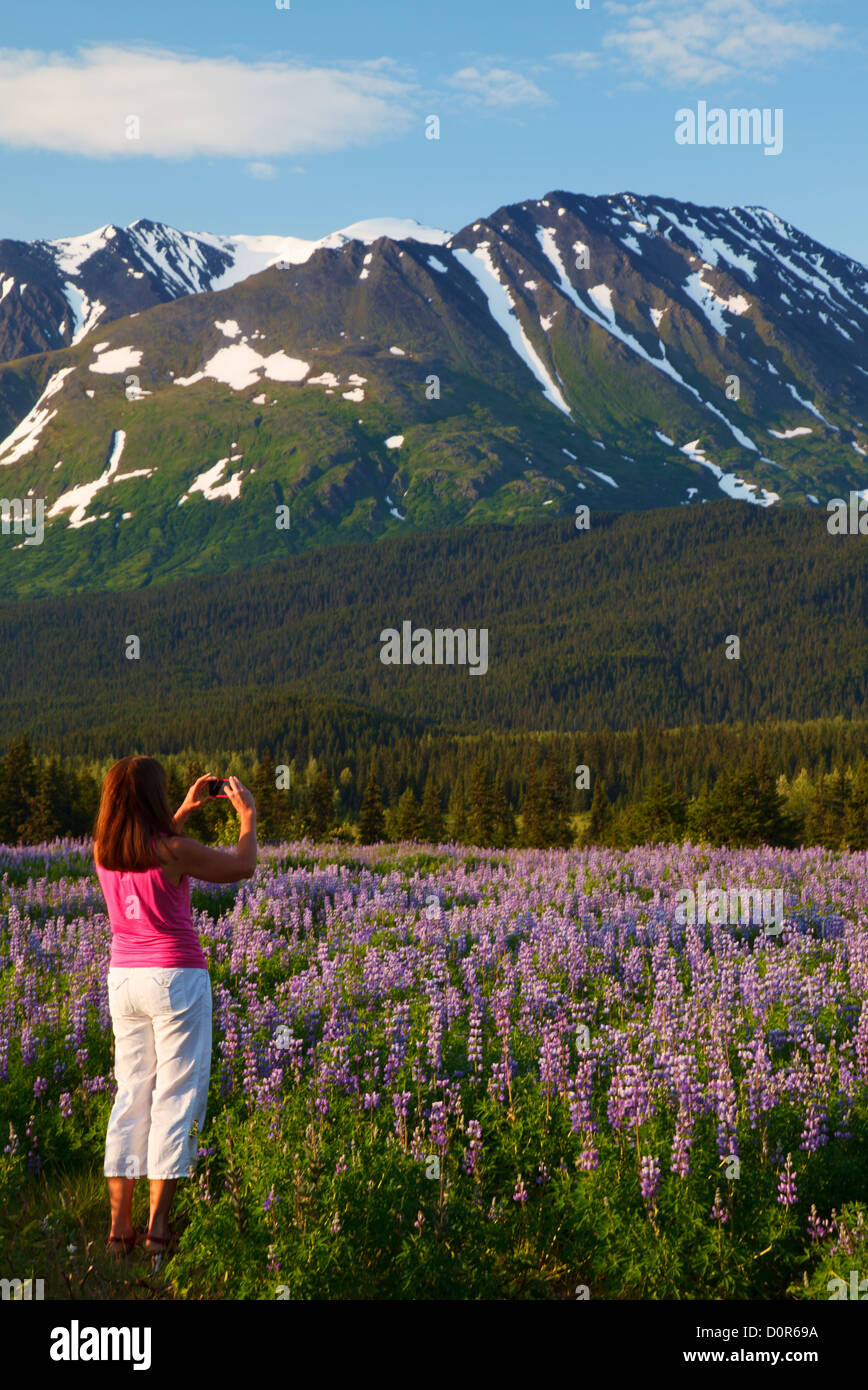Visitor taking a photo with an iphone, Chugach National Forest, Alaska. (model released) - Stock Image