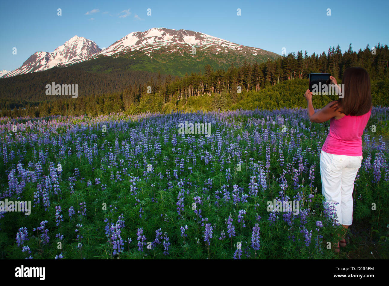 Visitor taking a photo with an ipad, Chugach National Forest, Alaska. (model released) - Stock Image