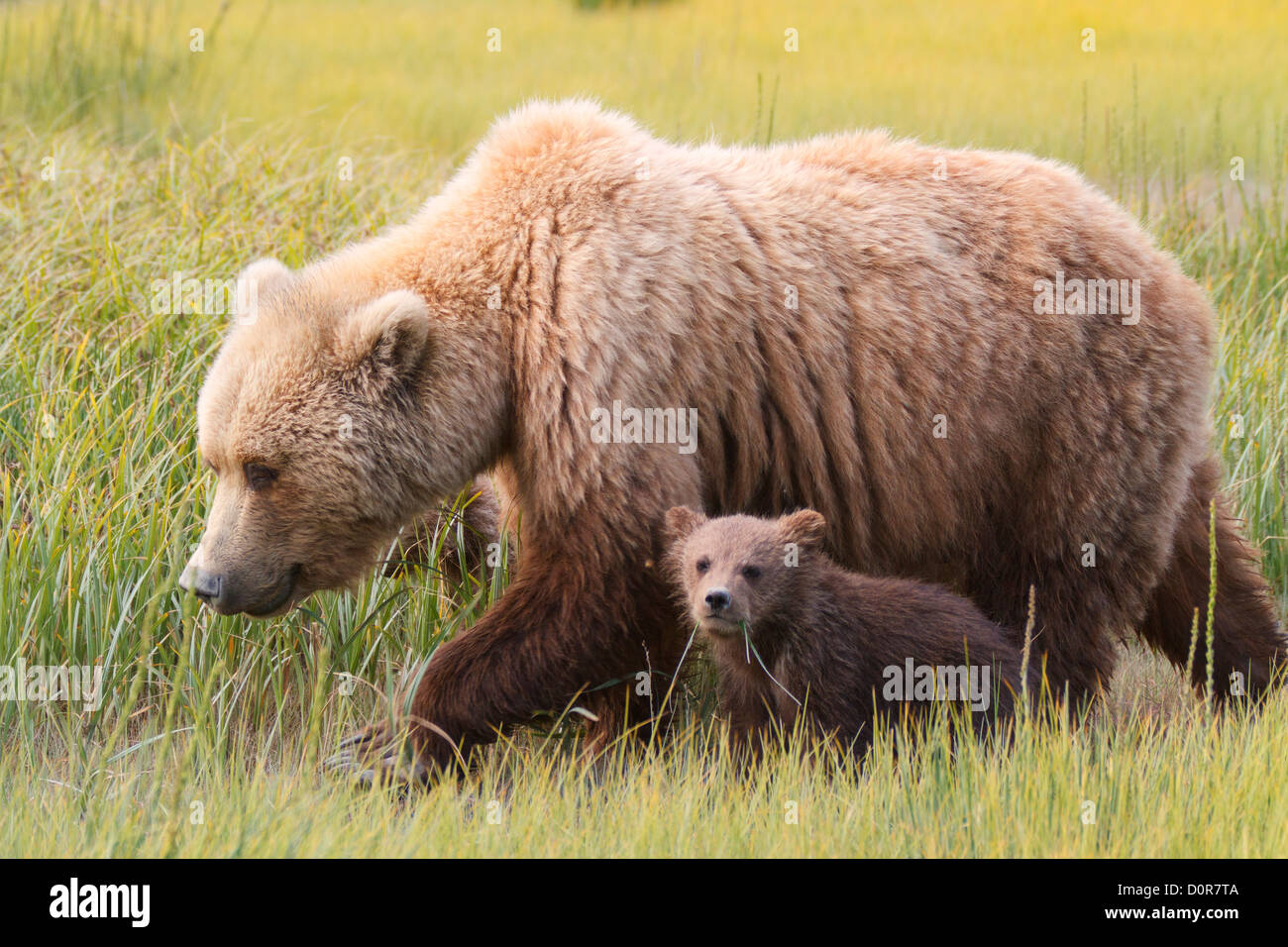 Daddy bear and cub