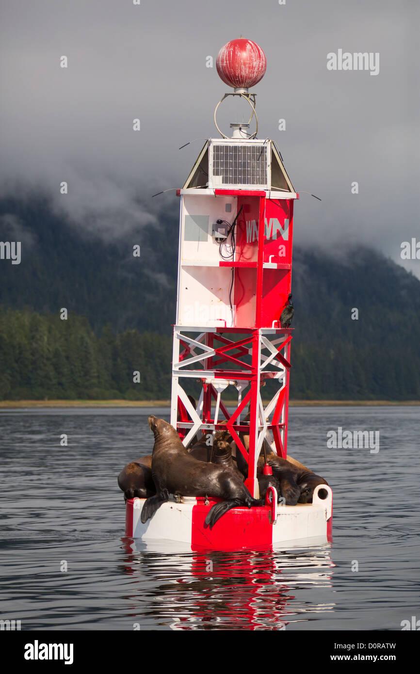 Sea lions on a buoy, Petersburg, Alaska. - Stock Image