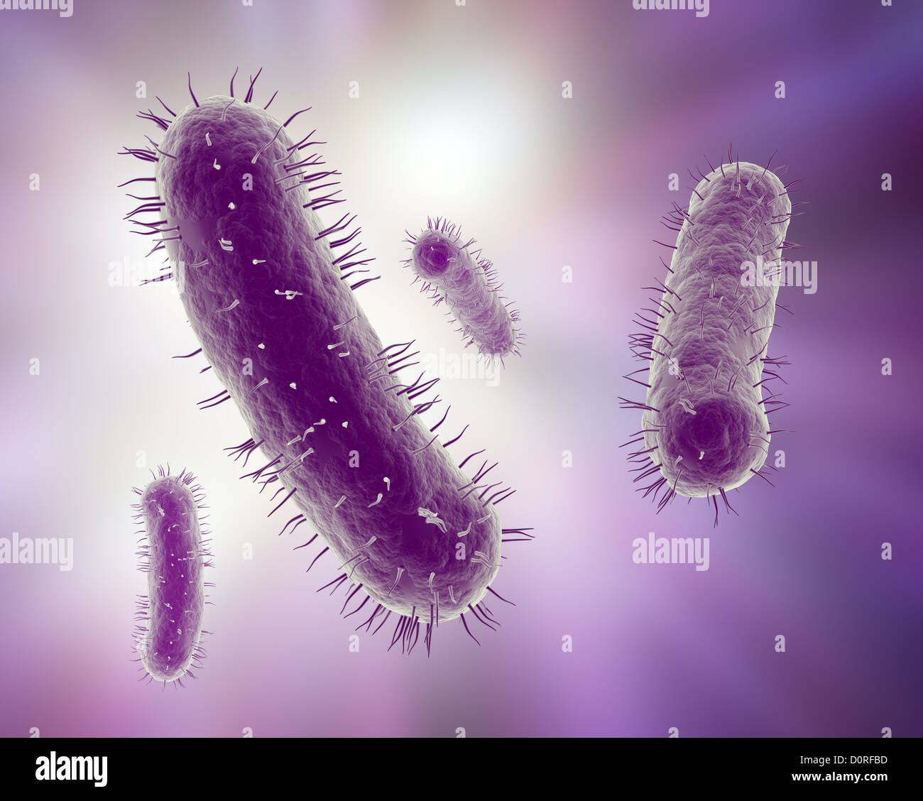 Scientific illustration of bacteria - Stock Image