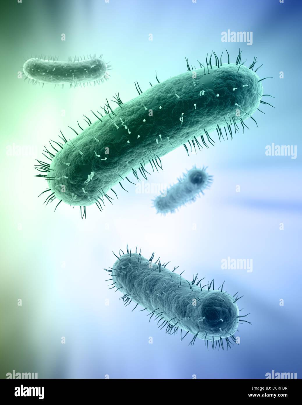 Scientific illustration of bacteria - Stock Image