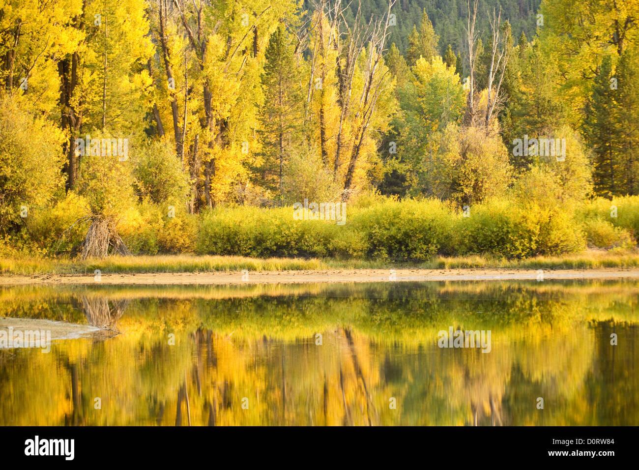 On Golden Pond - Stock Image