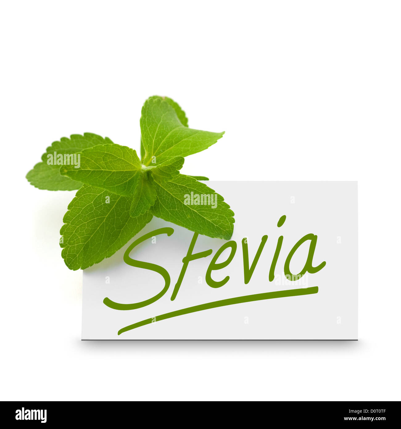 leaves of stevia rebaudiana over a card where it is written the word stevia, white background - Stock Image