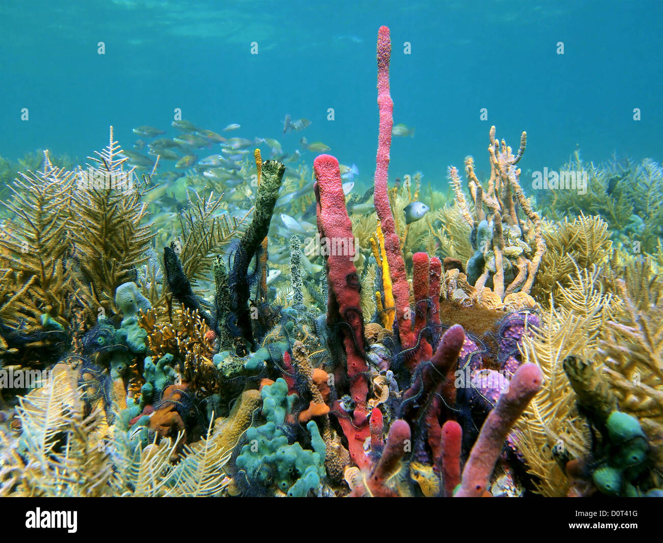 A thriving coral reef covered in corals and colorful sponges with abundant fish - Stock Image