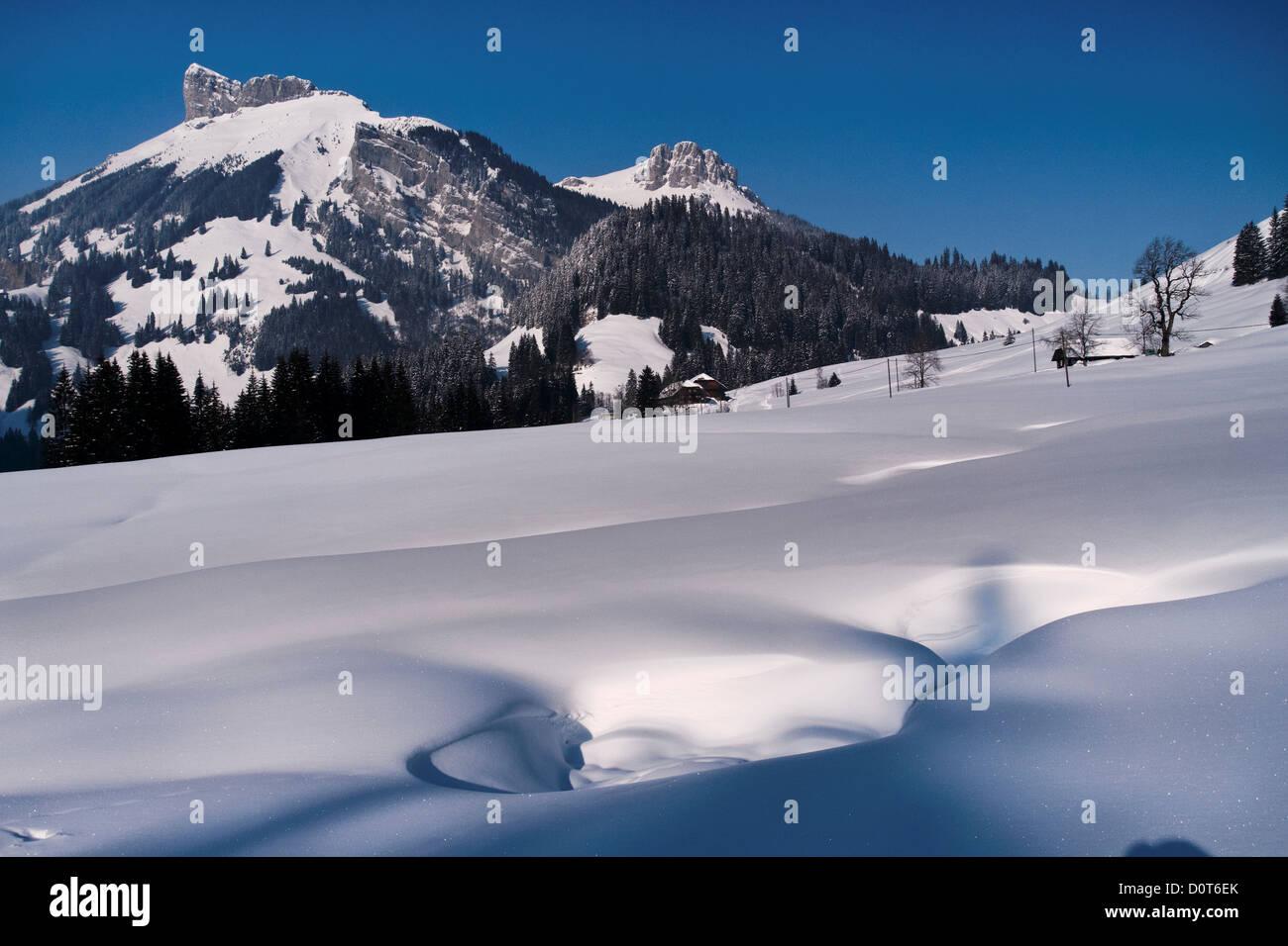 Mountain forest, Böli, Chüblisbüel, Emmental, spruce forest, house, home, court, yard, canton Bern, - Stock Image