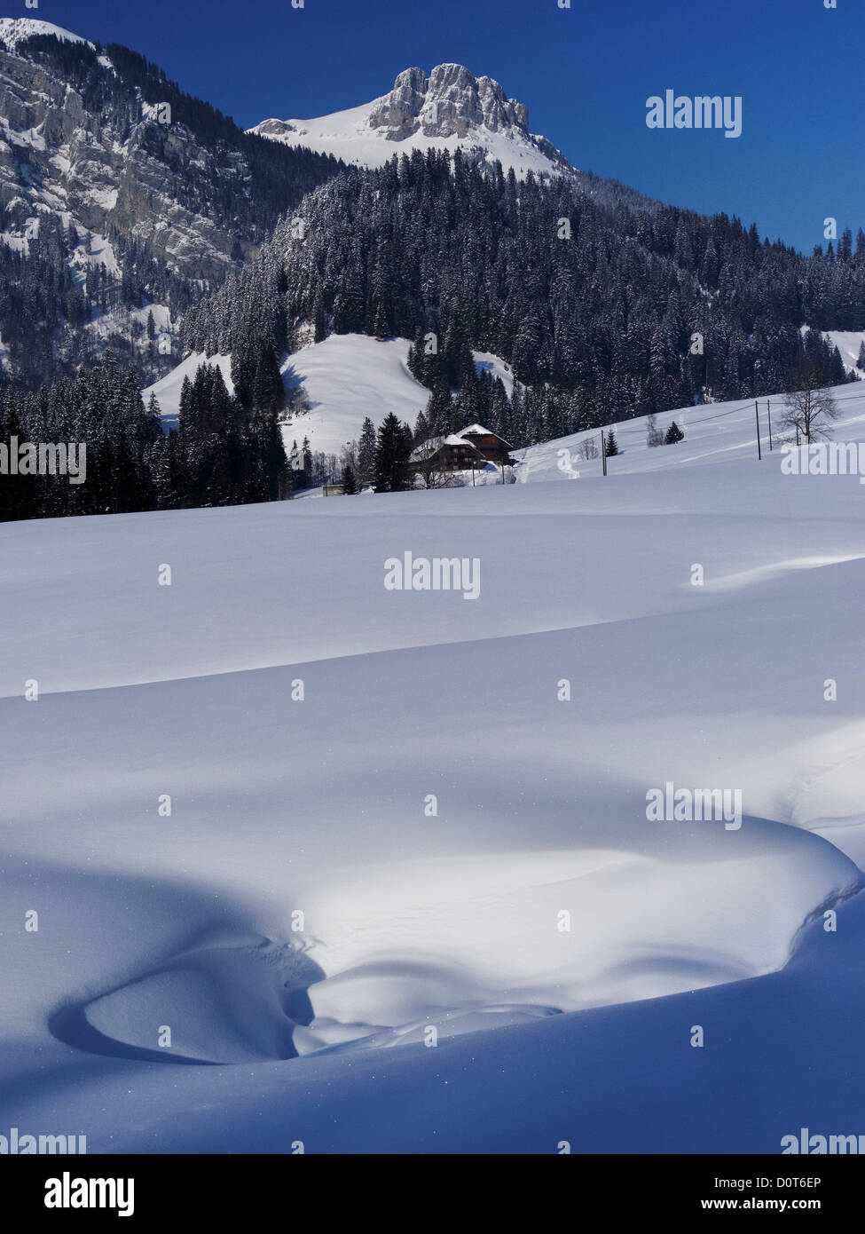 Mountain forest, Böli, Chüblisbüel, Emmental, spruce forest, house, home, court, yard, canton Bern, - Stock Image