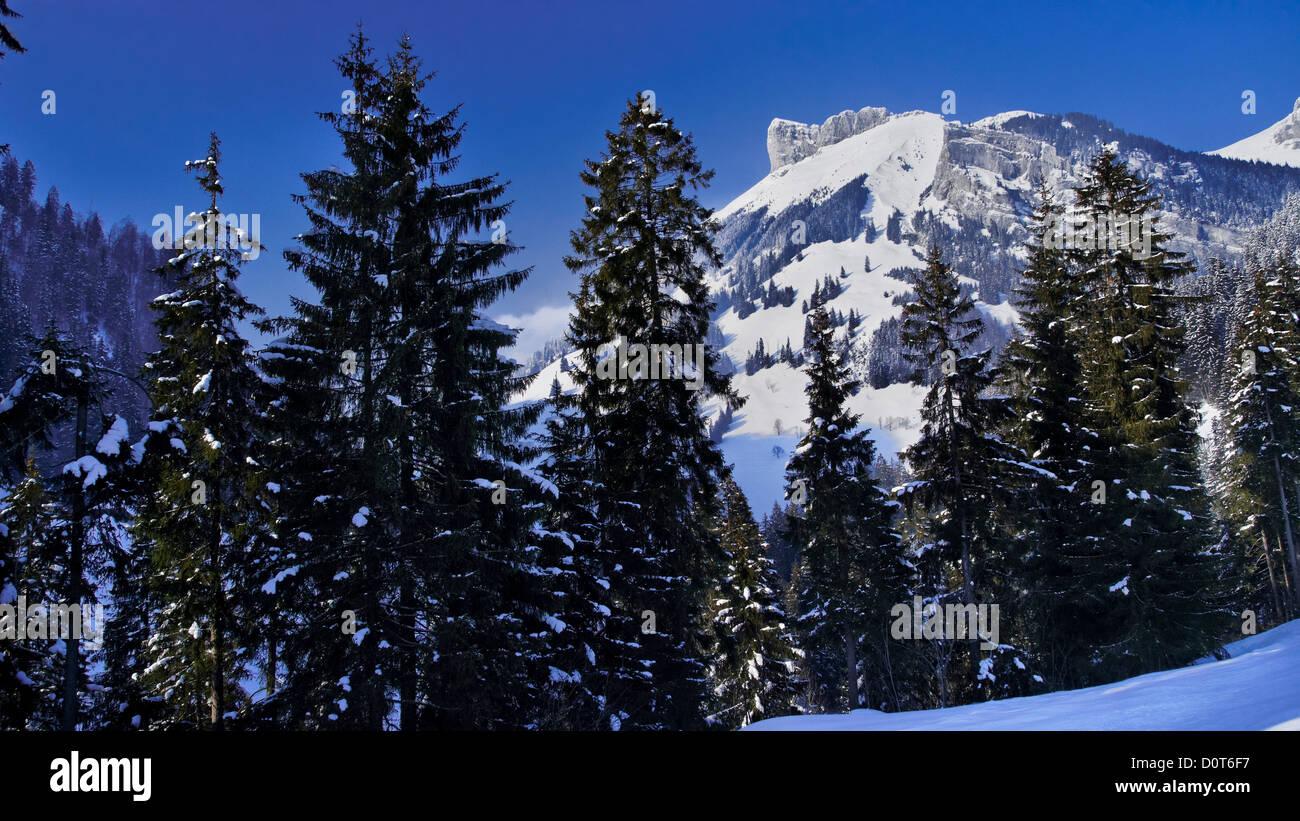 Mountain, Emmental, rock, cliff, spruce forest, canton Bern, Kemmeriboden, scenery, nature, Picea abies, Schangnau, - Stock Image