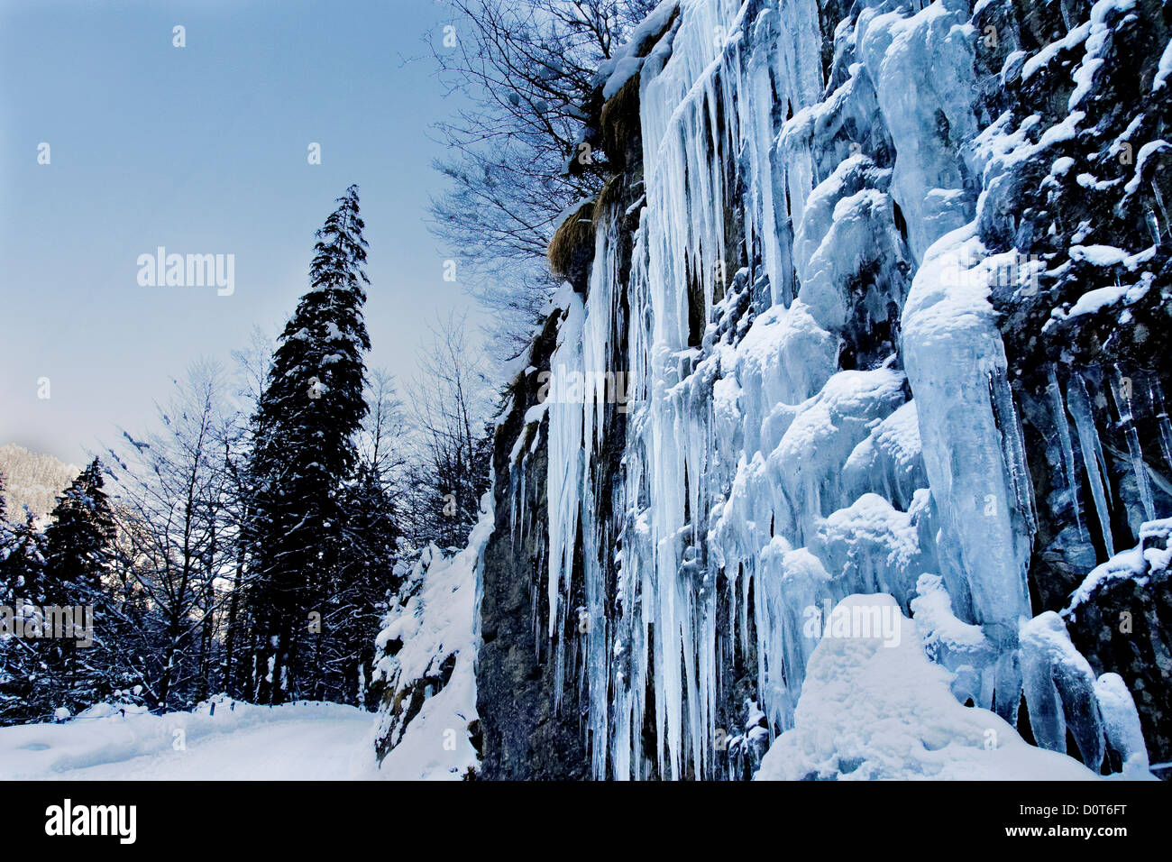 Ice, icicle, Emmental, cliff wall, spruce, frost, canton Bern, Kemmeriboden, scenery, nature, Picea abies, spruce, - Stock Image