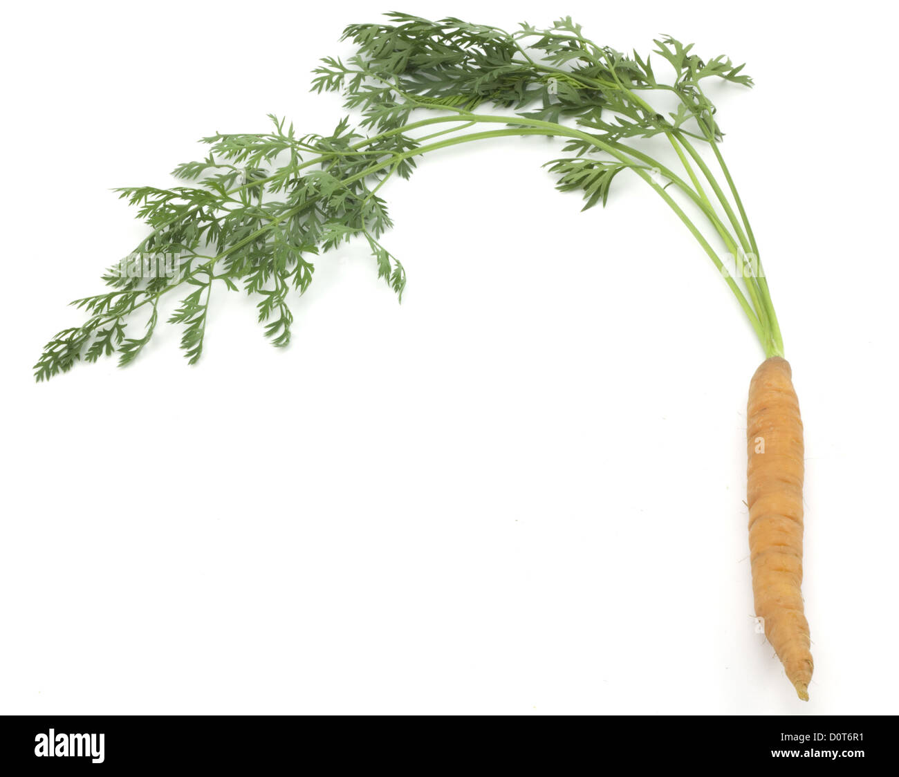 carrots with stems - Stock Image