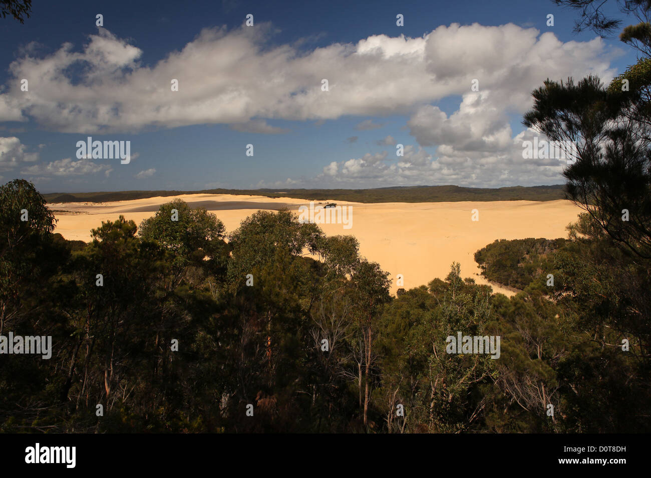 Sand dune, Sandblow, dune, sand, island, primeval forest, trees, Fraser Island, Queensland, Australia, view, edge - Stock Image