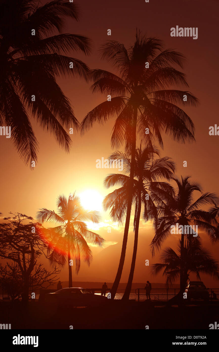 Port Douglas, Queensland, Australia, palms, sun, Sundown, sunset, Sunset, romantic, pair, couple, beach, seashore, - Stock Image