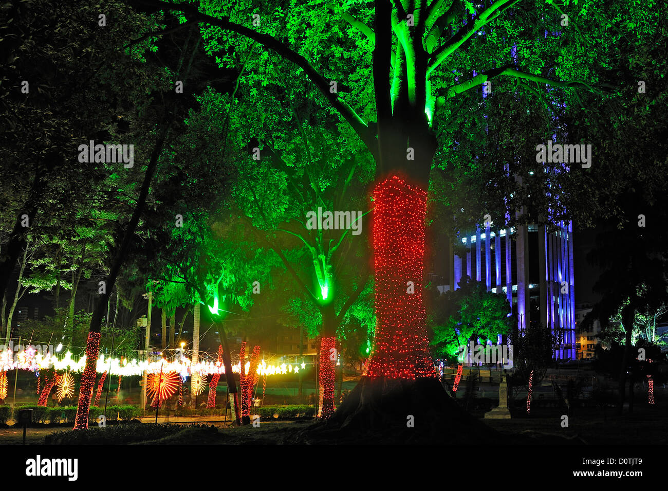 Christmas In Colombia South America.City Park Tree Downtown Lights Christmas Decorations