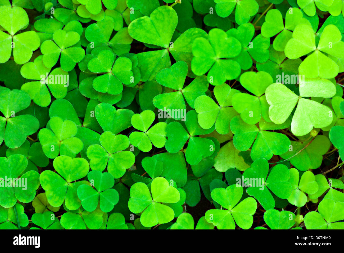 green clover background - Stock Image