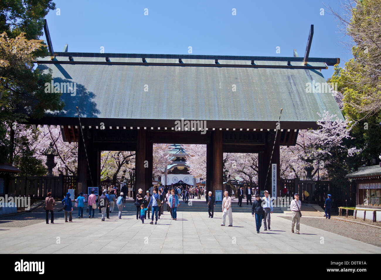 Japan, Asia, holiday, travel, Tokyo, City, Yasukuni, Shrine, Cherry Blossoms, flowers, gate, historic, history, - Stock Image