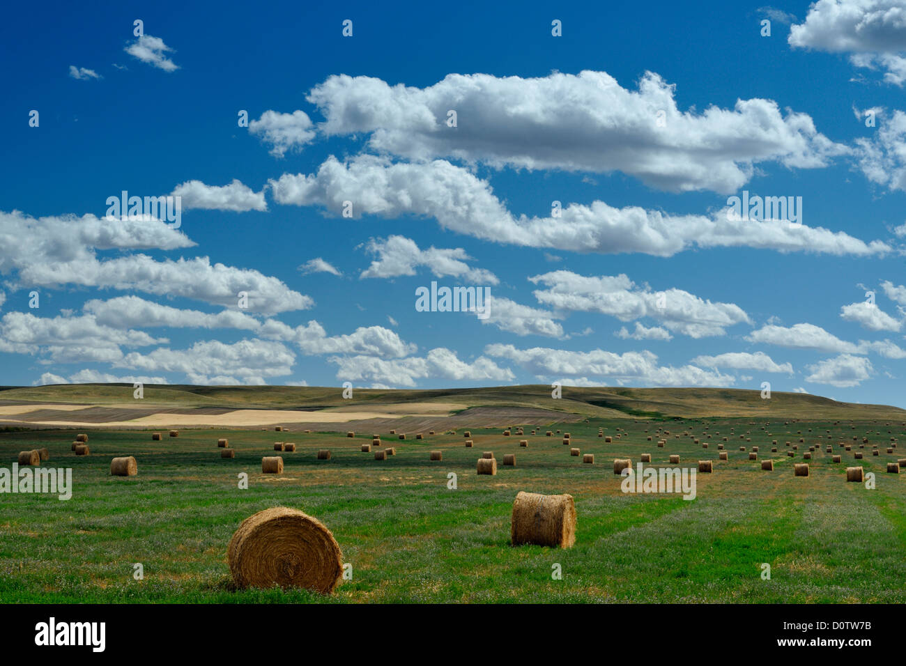 Hay rolls in the prairie, Milk River, Alberta, Canada Stock Photo