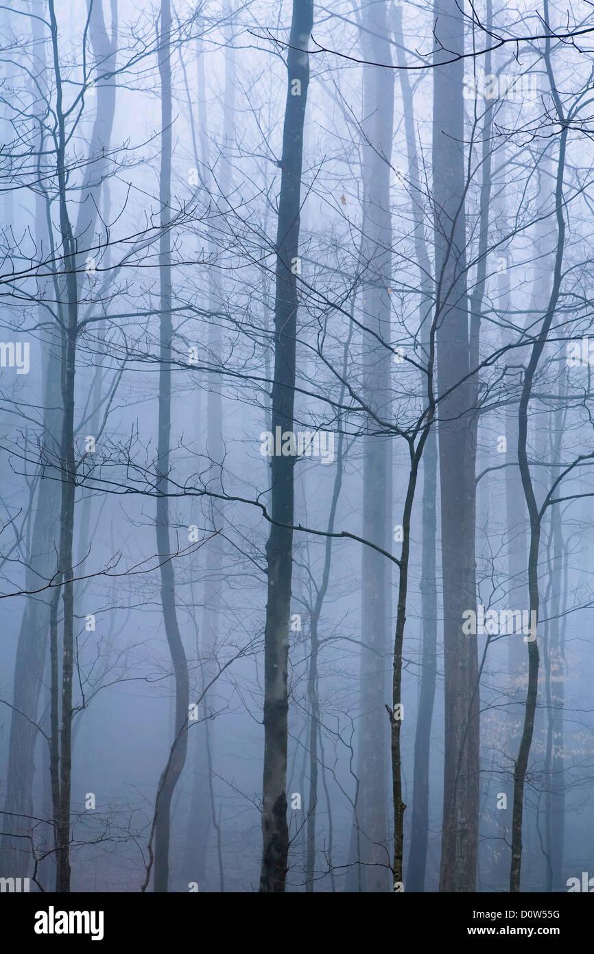 USA, Vereinigte Staaten, Amerika, Nebel, Dunst, nebelig, regnerisch, stimmungsvoll, kühl, atmosphärisch, - Stock Image
