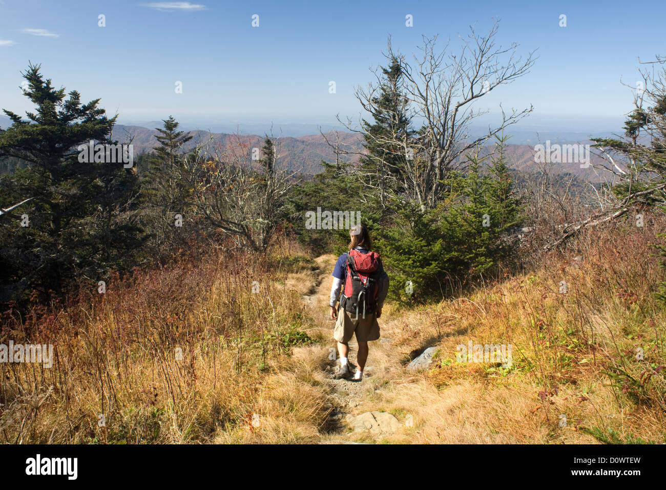 NORTH CAROLINA - Hiking the Appalachian Trail between Clingmans Dome and Double Springs in Smoky Mountains National - Stock Image
