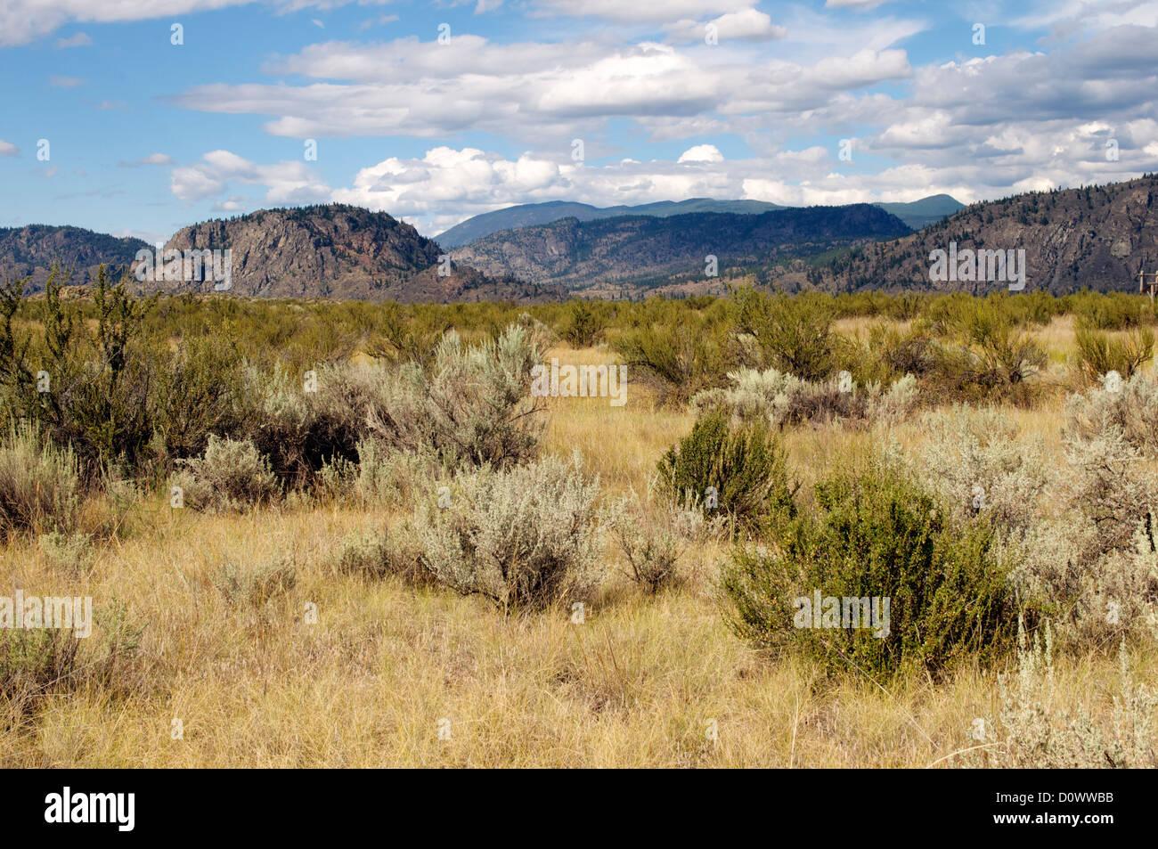 Desert brush landscape - Stock Image