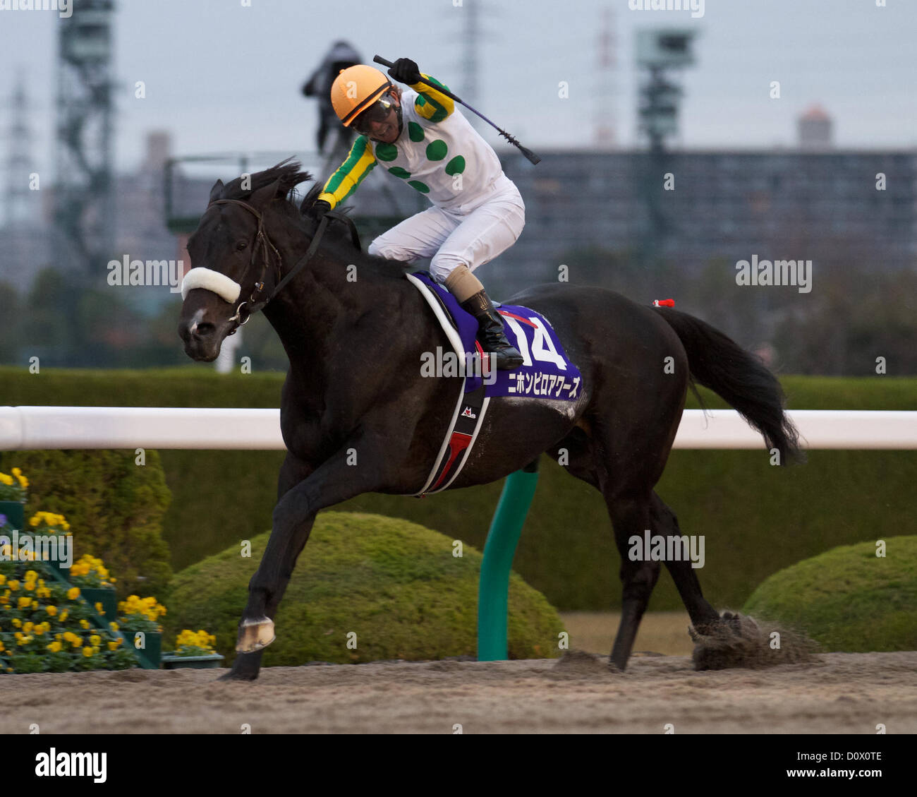 Dec. 2, 2012 - Takarazuka, Hyogo, U.S. - Nihonpiro Ours beats a field of G1 winners in the 13th Japan Cup Dirt at - Stock Image