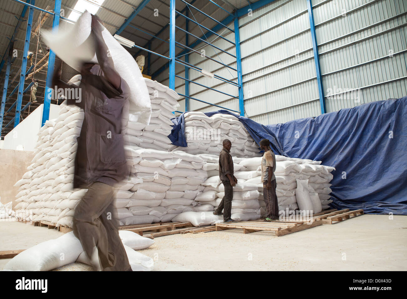 Workers load sacks of corn at a warehouse in Kampala, Uganda, East Africa. Stock Photo