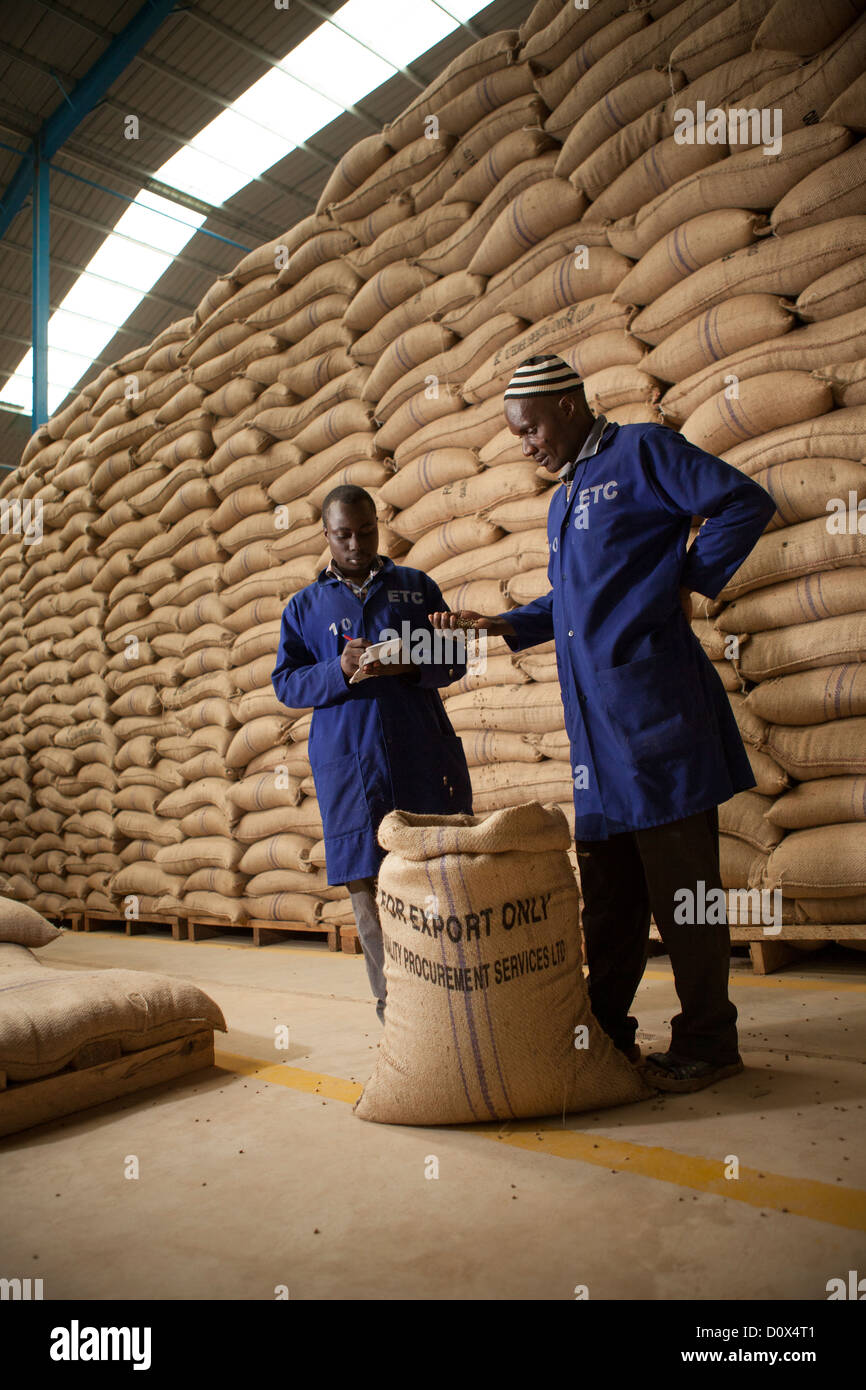 Workers prepare coffee beans for export at a warehouse in Kampala, Uganda, East Africa. - Stock Image